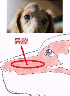 鼻腔内腫瘍