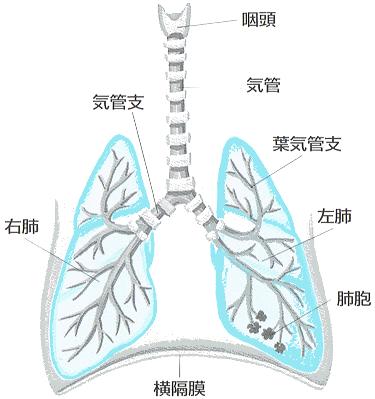 犬の呼吸器