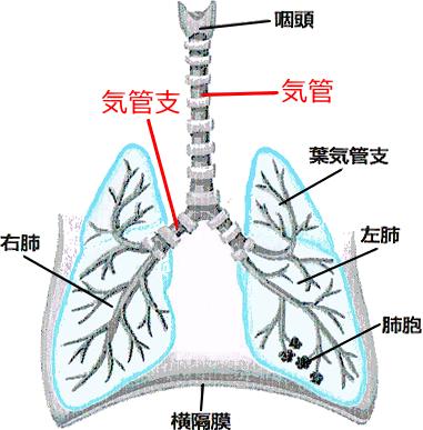 気管支狭窄
